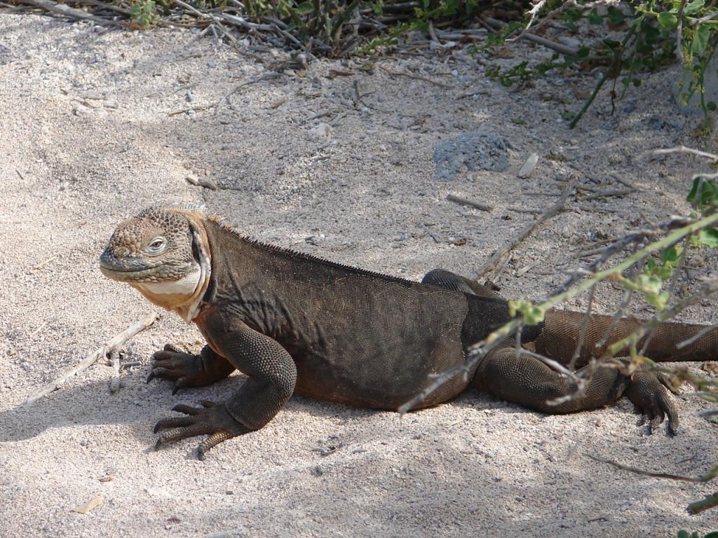 Zwiedzamy Galapagos