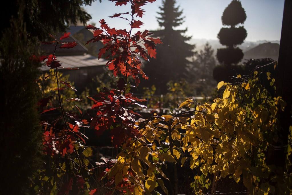 liście zmieniają kolor jesienią