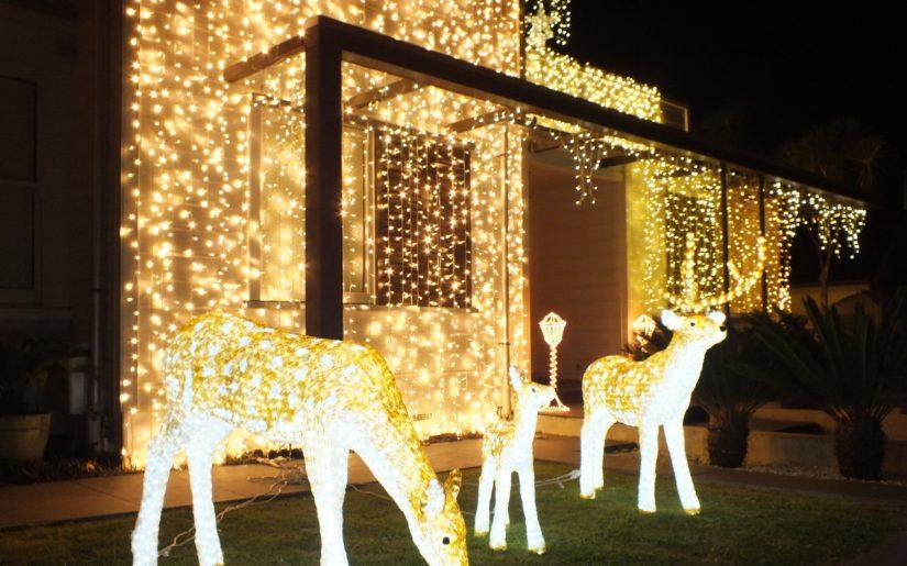 dekoracje-swiateczne-w-auckland-2