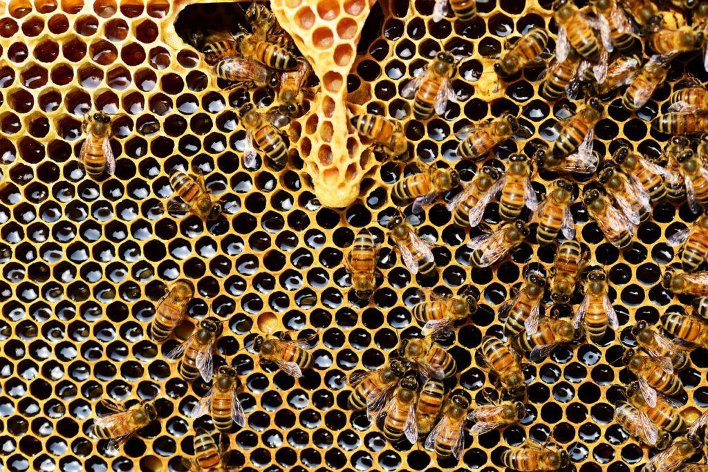 7 faktów o pszczołach