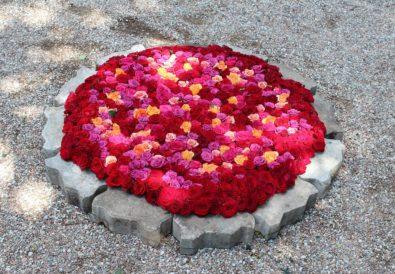 ogród botaniczny fot.Magia Kwiatów
